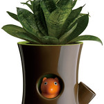 Self watering plant potの写真
