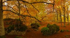 Islas verdes (Alfredo.Ruiz) Tags: verde helecho canon bosque otoño alava ef1740 entzia eos6d