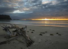 Wenderholm Sunrise (fantommst) Tags: ocean park sea newzealand beach water clouds sunrise landscape coast seaside cloudy shoreline auckland driftwood shore nz regional waiwera waterscape wenderholm lisaridings fantommst