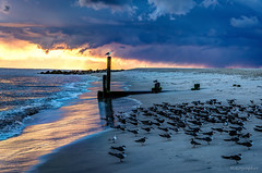 Stormy Sunset (Nikographer [Jon]) Tags: bird fall birds newjersey october oct nj cm capemay 2015 nikographer blackskimmers 20151018d810021784