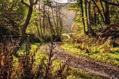 Contre-jour - Knapp morning. (Macro light) Tags: autumn colour nature sunshine woods walks wildlife reserve trust worcestershire sunlit contrejour leighbrook againstlight alfrick theknapppapermill