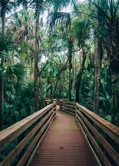 Black Bear Wilderness (J. Parker Natural Florida Photographer) Tags: color tree green nature forest landscape woods hike palm trail shade boardwalk stjohnsriver seminolecounty centralflorida floodplain vsco floridahikes blackbearwilderness