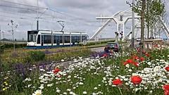 Terugblik 2015: In de bloemetjes gezet (Peter ( phonepics only) Eijkman) Tags: city holland netherlands amsterdam transport nederland bridges tram rail rails trams noordholland gvb combino nederlandse bruggen