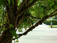 HTMT TWISTED BRANCHES (Visual Images1) Tags: htmt twisted branches treemendoustreetuesday binghamton newyork h