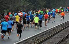 Hallwilerseelauf: Halbmarathon mit Geleisanschluss