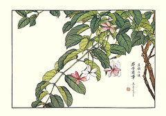 Rangoon creeper (Japanese Flower and Bird Art) Tags: flower rangoon creeper quisqualis indica combretaceae shoseki kose nihonga woodblock picture book japan japanese art readercollection