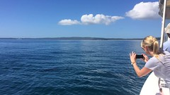 Dolphin Watching (petes_travels) Tags: dolphin watching video jervis bay new south wales australia