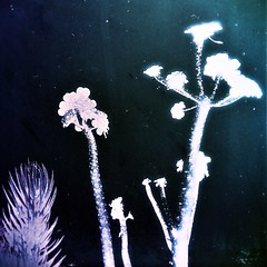 at it (Dom Guillochon) Tags: nature life time light sunlight plants reality dream existence atit digital manipulation