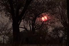 Atardecer entre Bosquimanos / Sunset between Bushmen (Jos Rambaud) Tags: bushmen bosquimanos tribu tribe tribal lifestyle people sunset atardecer sol arbol tree