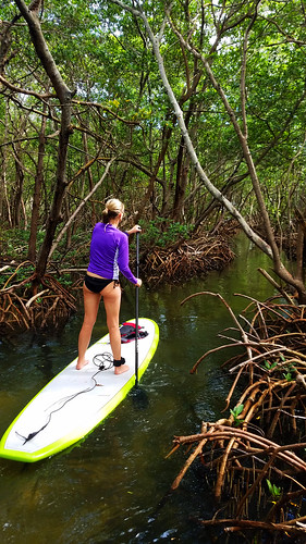 10_18_16  Lido Key paddleboard Tour 01
