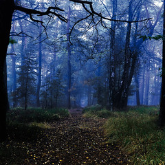 shortcut to chestnuts (tommy1905195) Tags: trees forest grass woods pastel colours path way autumn fall green blue mysterious mist germany fairy tale