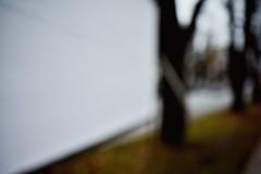 Along the way (vor morgen) Tags: trees umwelt unschrfe
