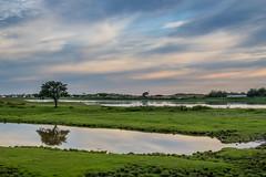Reflection of a tree (Infomastern) Tags: skanr cloud landscape landskap reflection reflektion sky spegling tree trd water