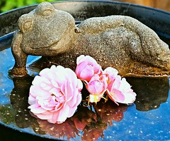 But I'm Happy! - (Explore #218, Oct. 24, 2016) .. (Irene, Montreal, QC) Tags: frog friends frogsculpture sculpture sculptures statues smallsculptures garden gardens gardensculpture flowerpower funny funtime localgarden outdoor outdoors outdoorstatues outdoorart art artobjects explore