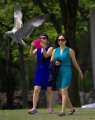 Take The Shot (swong95765) Tags: gull seagull bird animal landing flight wings feathers women females ladies park