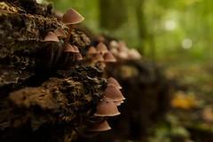Herfst in het Vliegenbos (Skylark92) Tags: nederland netherlands holland amsterdam noord vliegenbos bos forest herfst autumn mushroom paddestoel foliage bladeren