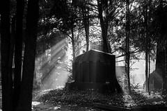 Gravestone (LAK.Photography) Tags: melaten graveyard cemetery kln cologne bw blackwhite whiteblack sw schwarzweis schwarzweiss nikon d810