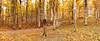 FORESTA DEL CANSIGLIO. (FRANCO600D) Tags: altopianodelcansiglio cansiglio altopiano foresta bosco betulle stradina viottolo sterrato bl tv veneto fregona italia italy italie italien bellitalia smartphone samsung note4 fotocomposizione franco600d