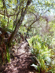 To the waterfall (LeelooDallas) Tags: australia tasmania pyengana halls falls waterfall tree water forest andscape dana iwachow fuji finepix hs20 exr