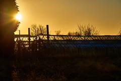 Coucher de soleil (BelgiumOnePoint) Tags: lahulpe automne fall herfst soleil sun zon coucherdesoleil sunset zonsondergang campagne country nikon d610 c1 couleurs colors kleuren serre glasshouse