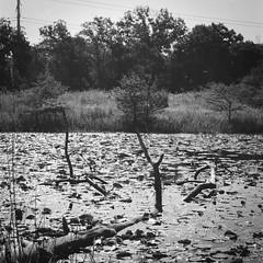 Houston Arboretum Series (J&E Adventures) Tags: naturewalk natural staybrokeshootfilm ishootfilm nature canona1 issf istillshootfilm canonphotography houston filmisnotdead filmstagram natureonly filmphotography analogue thefilmcommunity naturesecrets analog naturelover analoguevibes 35mmfilm buyfilmnotmegapixels filmsociety believeinfilm botanicgarden 35mm arboretum naturecenter texas unitedstates us