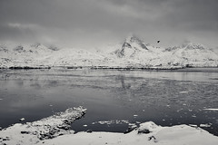 DSCF5872 (Chris Wolffensperger) Tags: greenland tasiilaq arctic winter snow village dogs polar northern light aurora fuji x fujifilm xseries xpro2 monochrome bw black white