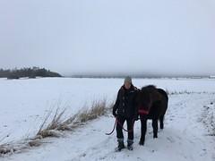 Ett strvsamt par (Patrick Strandberg) Tags: iphone iphone7 hst horse islandshst icelandichorse eilifur berga stergtland sweden