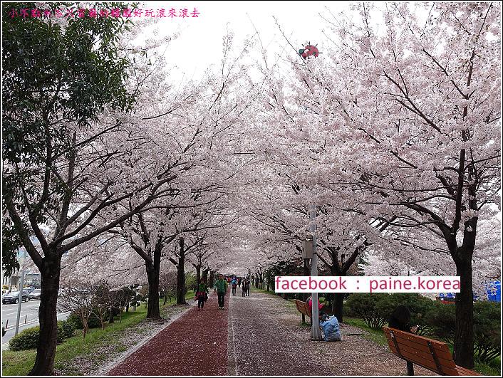 釜山沙上江邊公園櫻花路 (12).JPG