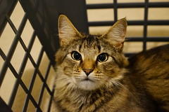 In the washing basket (Jenny.Lawrence) Tags: cats pets animals mavis