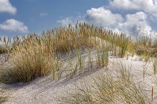 Dune Fascination...