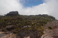 Trekking Mount Roraima Day 4, Venezuela (ARNAUD_Z_VOYAGE) Tags: park sunset brazil sun color colour nature colors america sunrise trekking landscape amazing colours view earth plateau venezuela south centro guyana chain mount huge region moutain oldest formations roraima tepui geological plateaus pakaraima
