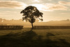 The Last Tree (Philip Whaley) Tags: park mist tree sunrise nikon d750 nikkor philip starburst bradgate whaley 2470 1424 lonesometree