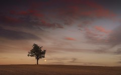 Moon Tree and a Big Sky (Captain Nikon) Tags: sunset moon silhouette derbyshire melbourne bigsky moods lunar lonetree perigee lonesometree supermoon nikond7000