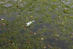 Fremdkörper (gripspix (OFF)) Tags: glass river bottle rubbish algae fluss müll flasche glas neckar algen 20150922