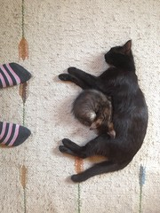 Mother, daughter and me (GrusiaKot) Tags: feet foot ukraine gatto gattino calzini  ucraina