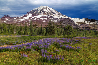 Pines, Lupines and a Big Mountain