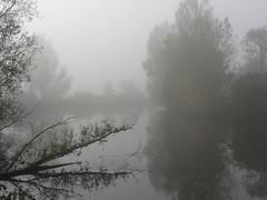 november trees at Harle river (achatphoenix) Tags: tree fog river baum carolinensiel harle ostfrisland