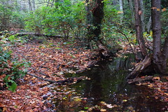 Creek in the woods (ngawangchodron) Tags: canada bc victoria vancouverisland royalroadsuniversity colwood sun18oct