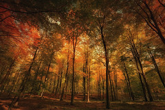Day 204/365 … Autumn (Bo Hvidt) Tags: autumn nik 365 xt1 bohvidt nikcollection fujifilmxt1 xf1024mm fujinonxf1024mmf4rois