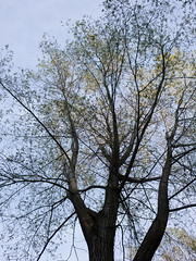 20151031-GR010857-Edit (fleetingphotons) Tags: trees ricohgr wasingestate warrenbeat