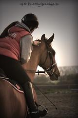 Wilco (PhotOw'graphie) Tags: horse cheval dressage quitation cavalire