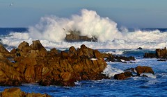 December1image6051 (Michael T. Morales) Tags: waves ptpinos