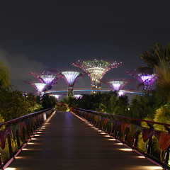 Supertree Grove (Arni J.M.) Tags: bridge trees sky plants night garden lights singapore waterfront grove rail walkway skyway marinabay gardensbythebay supertree supertrees supertreegrove