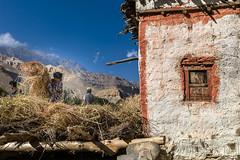 Harvest (Agnes Cassiere) Tags: trek mustang népal chele octobre2015 tousdroitsréservés©agnèscassière ©agnèscassièrephotography