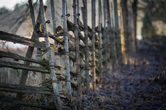 Old Fence (Nyllet) Tags: sunlight leaves fence bokeh electrified gärdesgård sigeränget konicahexanonar8518 sigerängsbäcken