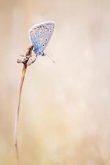 haut perch (YannW) Tags: nature sauvage bokeh papillon butterfly azur canon 6d 100mm