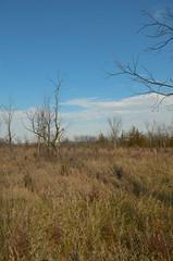 Prairie (wackybadger) Tags: bluesky wisconsinstatenaturalarea lawrenceprairiesna nikon1855mmf3556gafsvr tree rockcounty wisconsin nikond7000 sna340 nikon savanna sky prairie