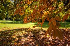 Herbstlaub (thunderbird-72) Tags: france schlosspreisch chteaudepreisch nikond90 herbst frankreich parc lorraine garten jardin park automne autumn september lothringen basserentgen fr