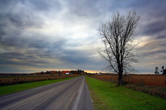 An Ominous Fall  Afternoon (Brian 104) Tags: tree bare road cloudy autumn overcast