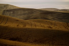 magic carpet ride.... (Alvin Harp) Tags: palousescenicbyway palouse rollinghills farming sonyilce7rm2 fe24240mm september 2016 alvinharp washington